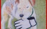 """""""O Direito dos Animais"""" (e-book)"""